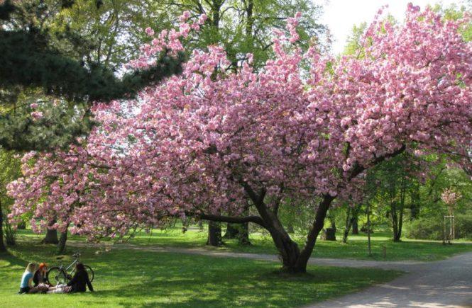 Clara Zetkin Park 1 (Irene)