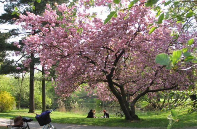 Clara Zetkin Park 2 (Irene)